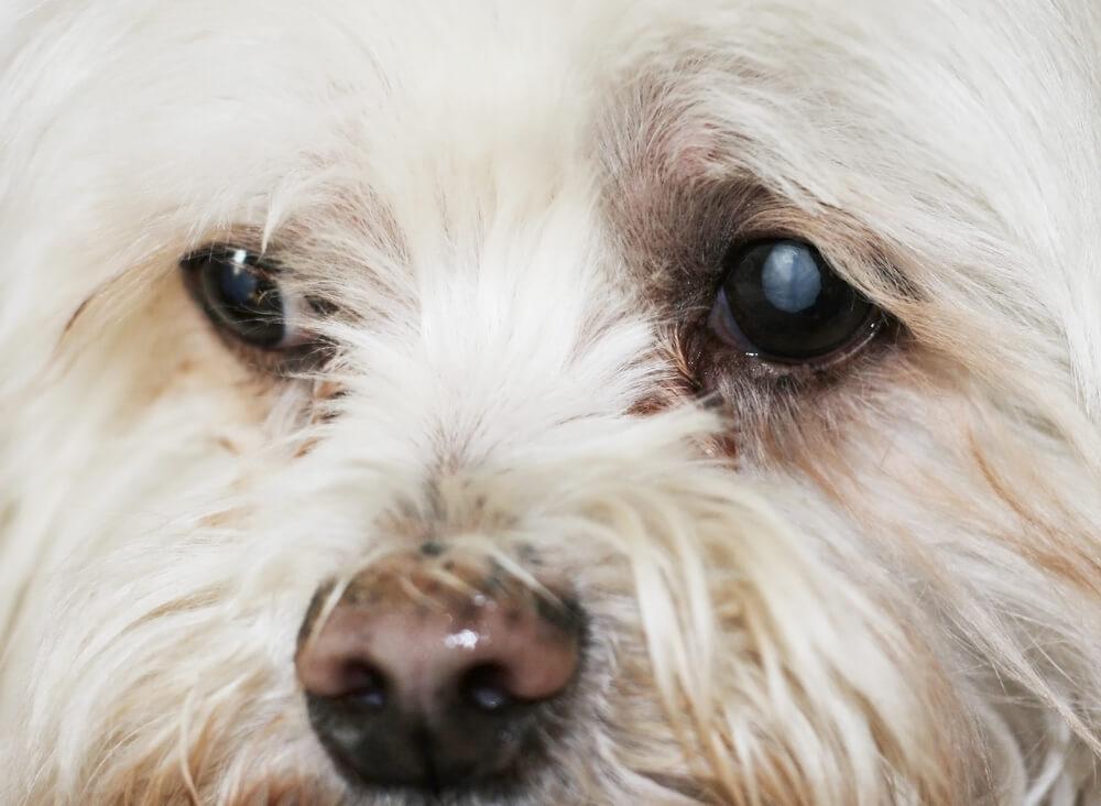Siva mrena ali katarakta: pomembno je zgodnje odkrivanje