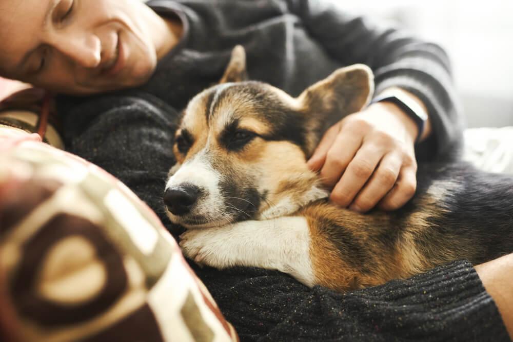 Ko pes sliši glas svojega človeka, se mu srčni utrip poveča za kar 46%