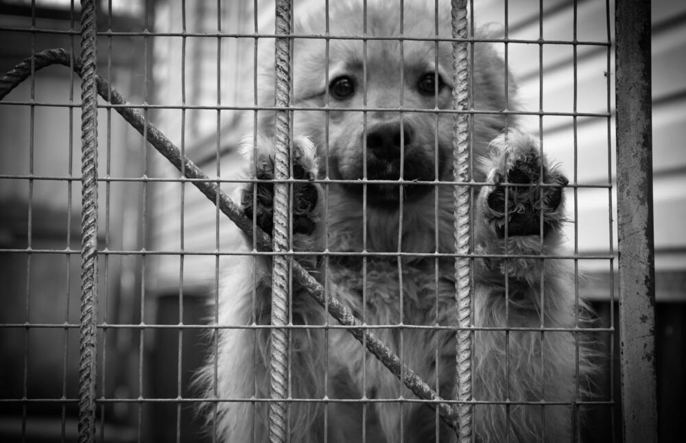 Naj se trpljenje zatiranih psov čimprej konča