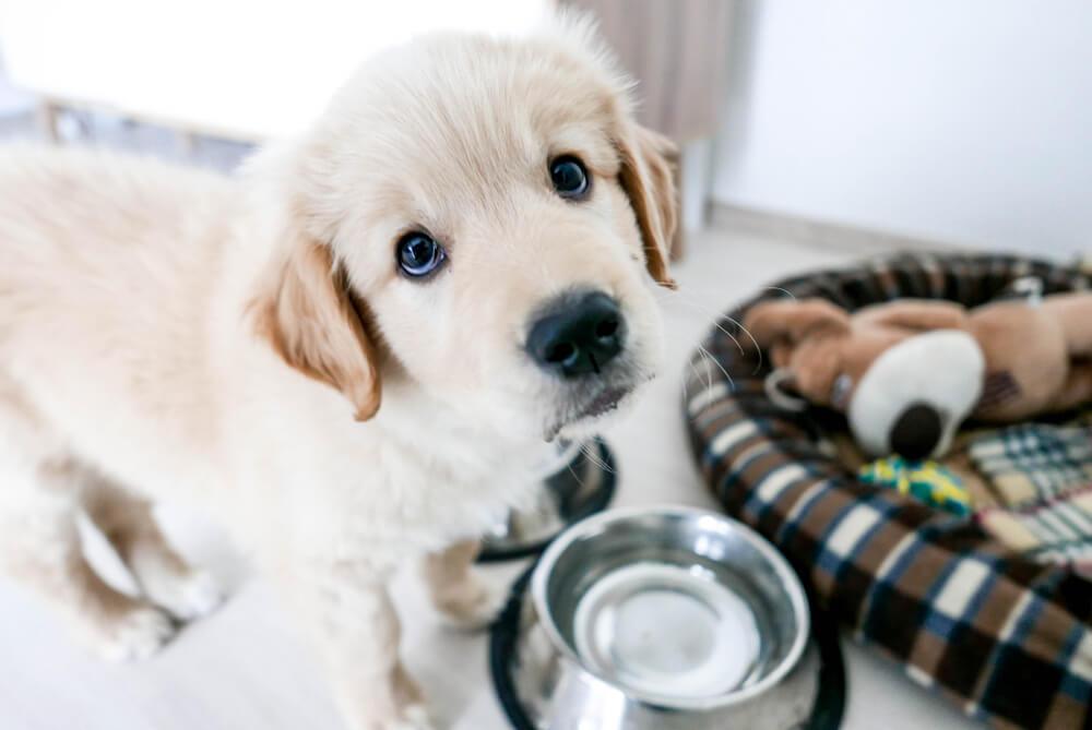 Uvajanje nove hrane pri pasjih mladičih