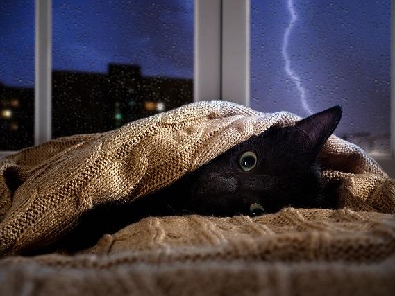 Mačka se boji neviht - kaj storiti?
