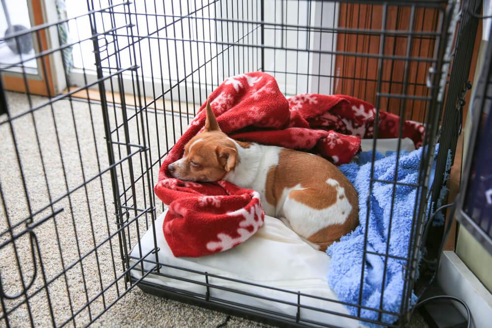 Navajanje psa na sobno kletko oz. hišni boks