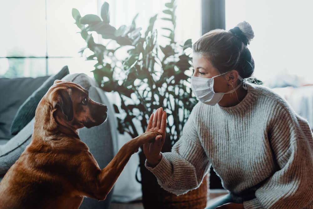 Psi manj dovzetni za okužbo s SARS-CoV-2 od mačk in domačih dihurjev