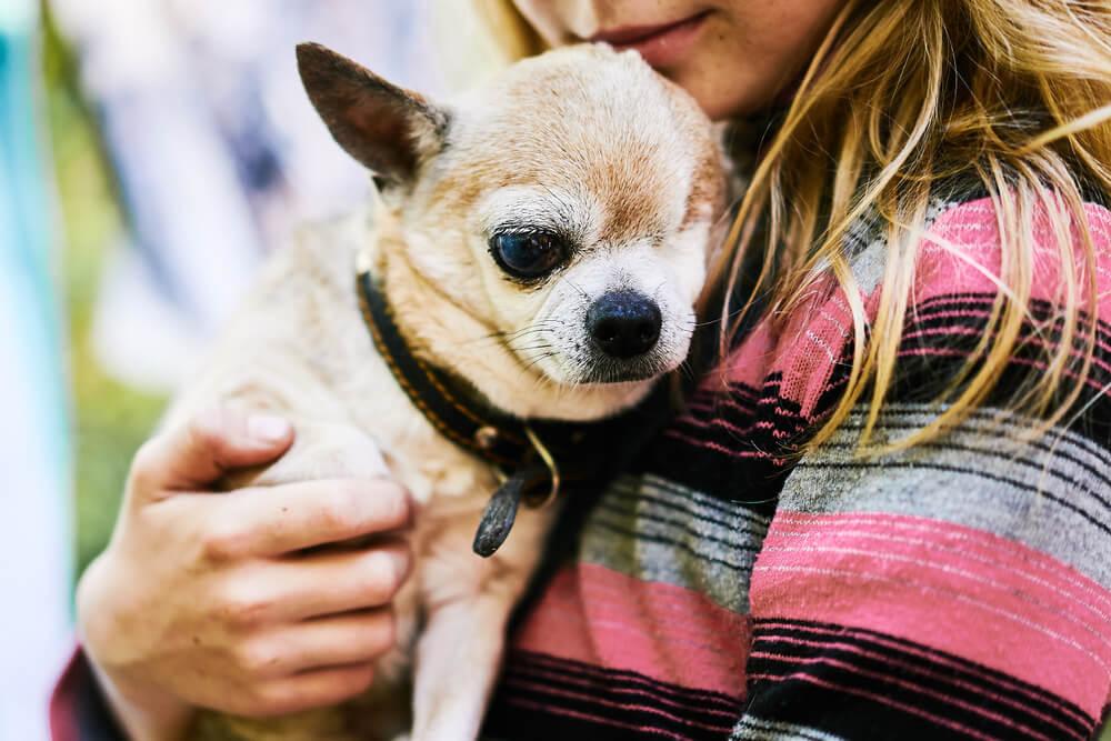 Kje je meja, do kdaj invalidnega psa ohranjati pri življenju?