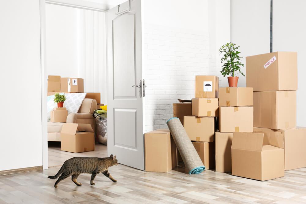 Navajanje mačke na novo okolje