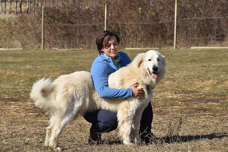 """Ovčarski psi in njihovo delo z ovcami: """"Drug drugega znajo odlično prebrati""""."""