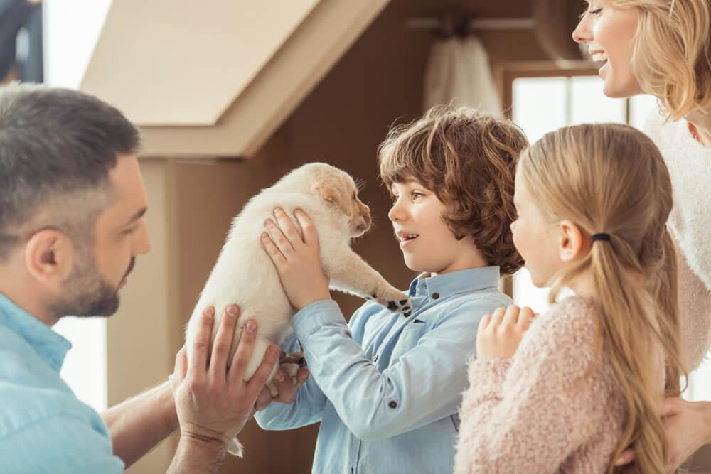 Ko v dom pride nov pasji mladiček