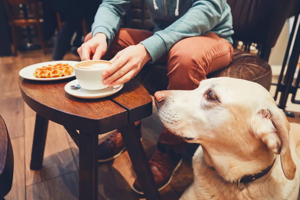 Počlovečenje psa - psu bolj kot lokal, odgovarja gozd
