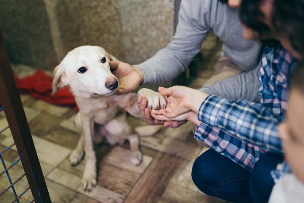 Je več časa zaradi trenutnih razmer dovolj dober razlog za posvojitev psa?