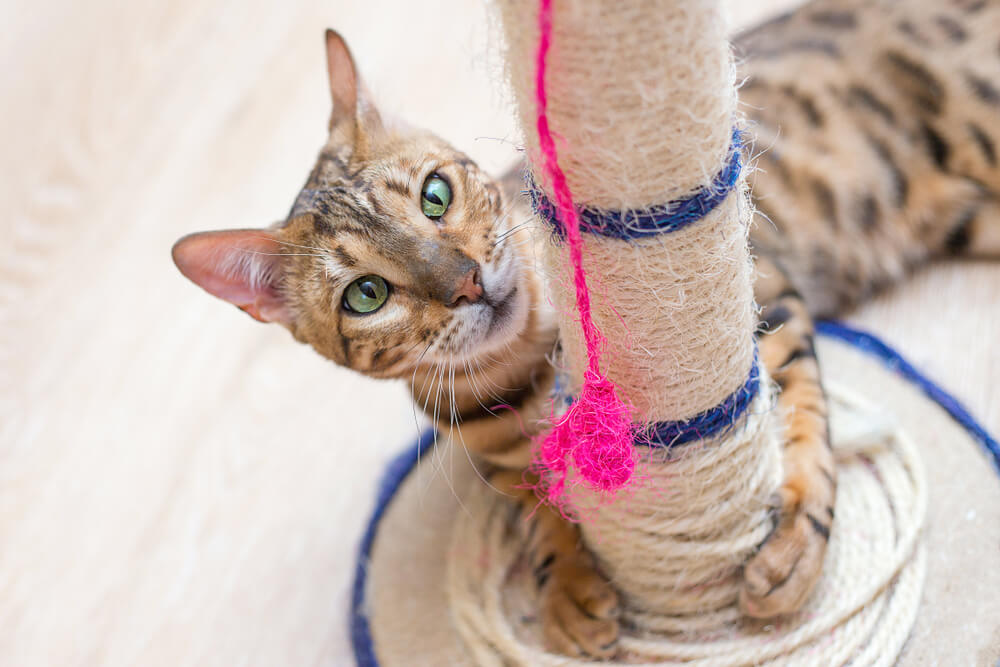 Praskalniki za mačke: na kaj paziti pri nakupu?