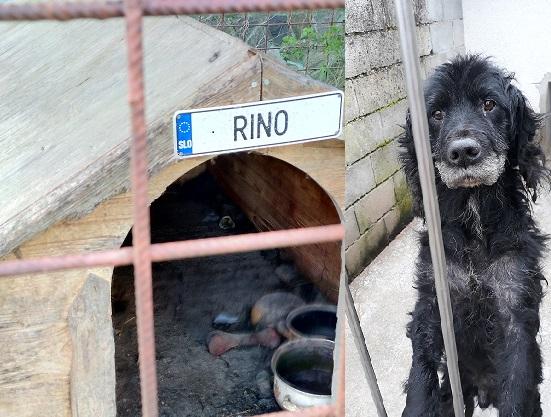 Rino – neviden je životaril v svojem boksu, upal na lepši dan