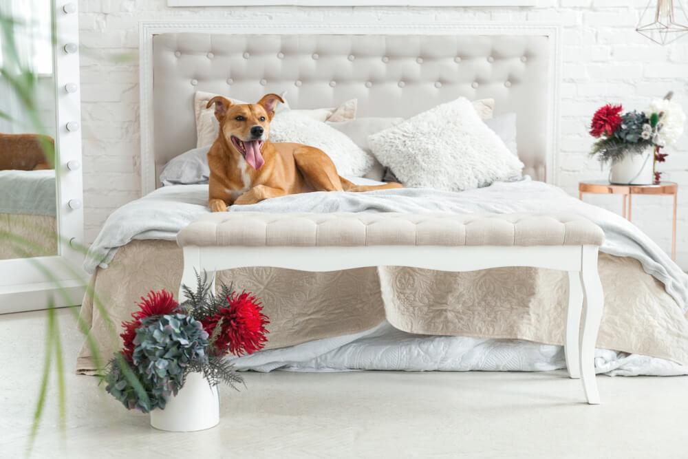 Iščejo se hišni ljubljenčki za sanjsko službo – iskanje najbolj prijaznega hotela