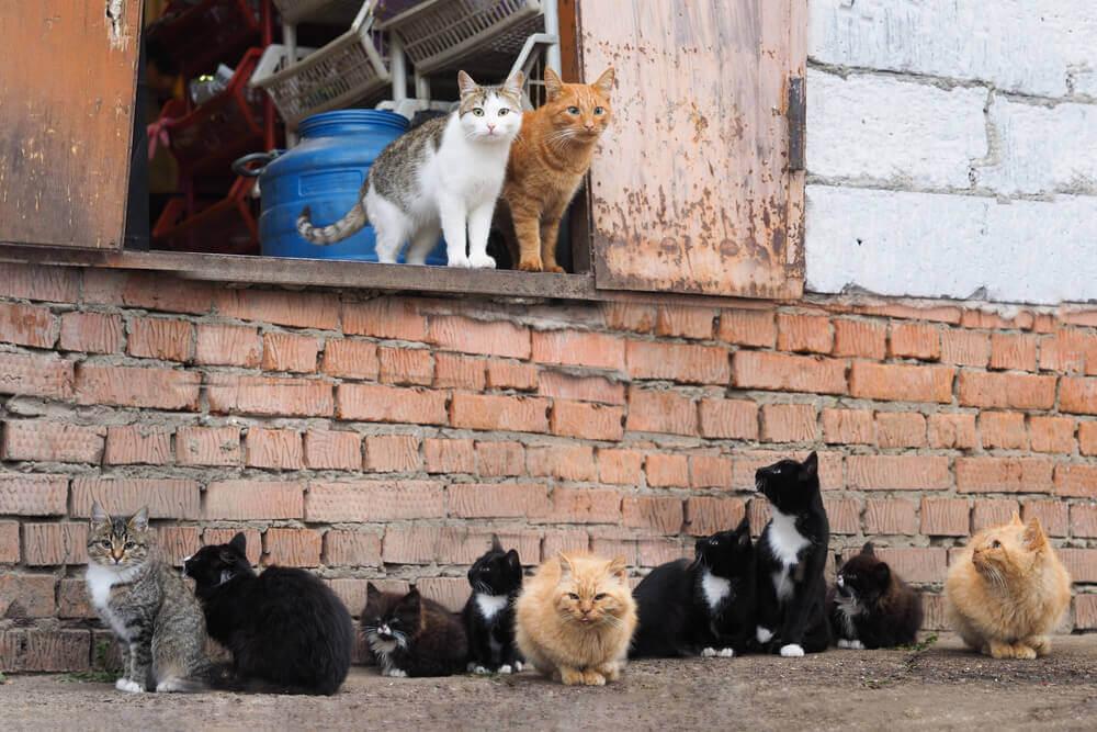 Sterilizacija in kastracija sta ključnega pomena pri reševanju problematike z brezdomnimi mačkami