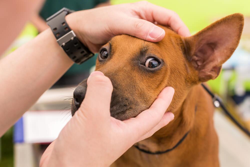 Težave z očmi, ki potrebujejo veterinarski pregled