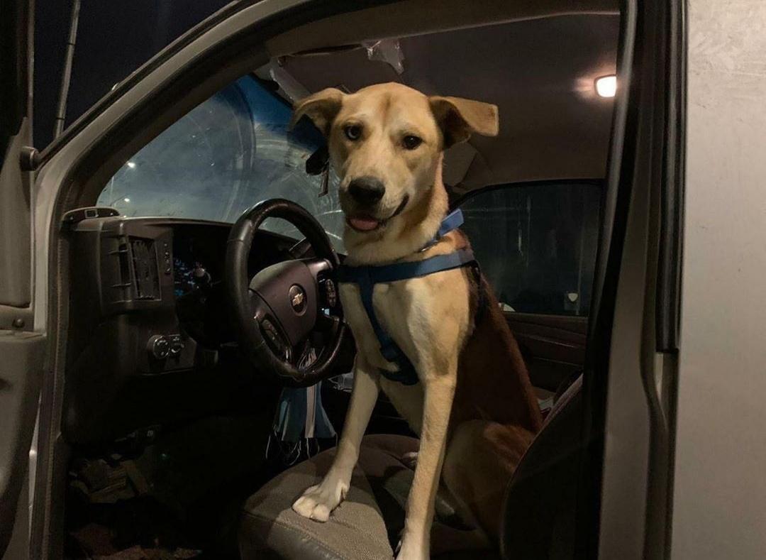Pretepenega psa po objavi posnetka rešila množica okoliških prebivalcev