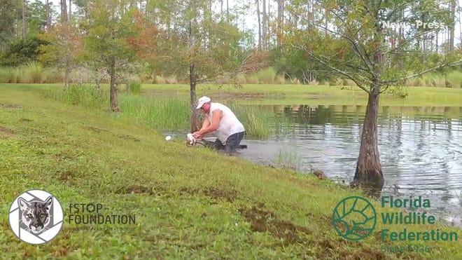 Video: Moški tvegal življenje, da je rešil svojega psa iz ust aligatorja