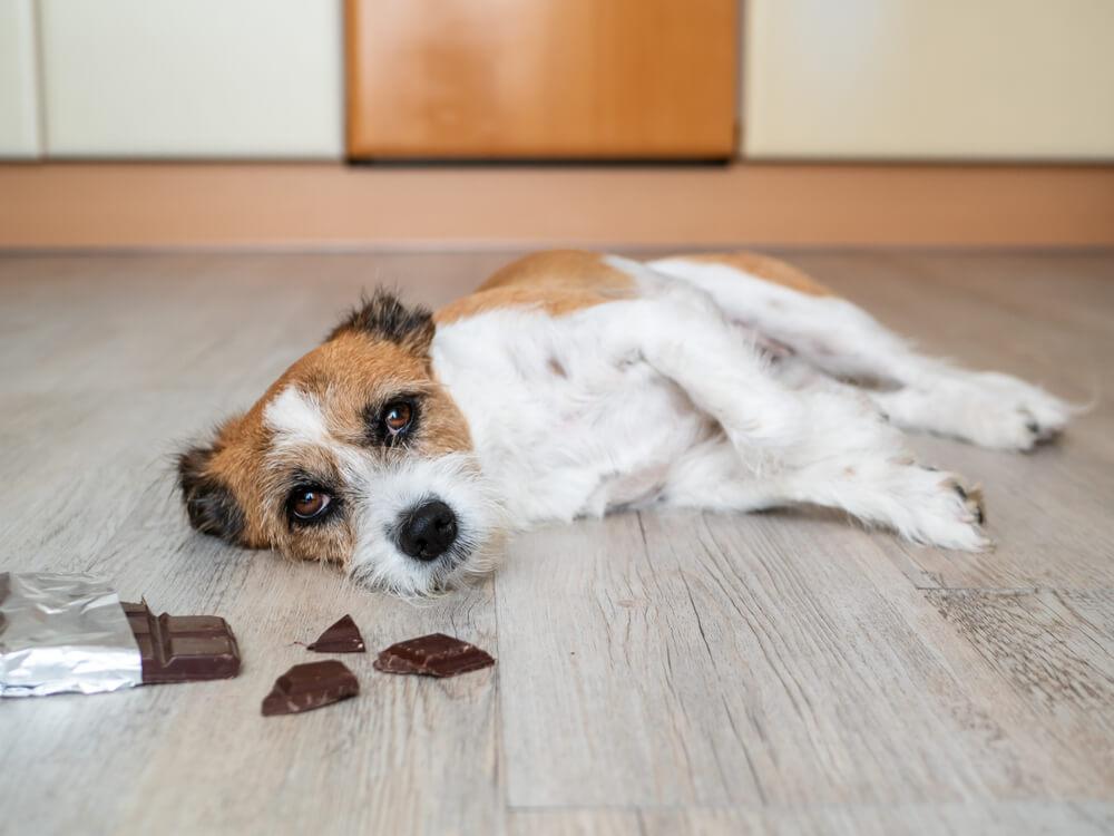 28 živil, ki jih psi ne bi smeli uživati