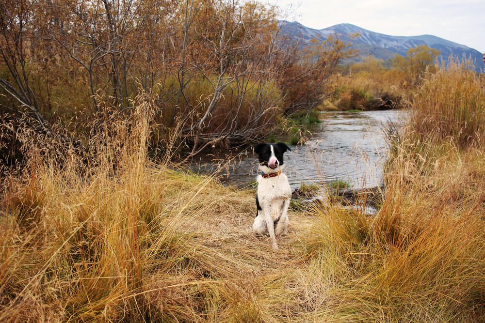 Teden dni po izginotju psičko Amoro našli na otoku sredi jezera