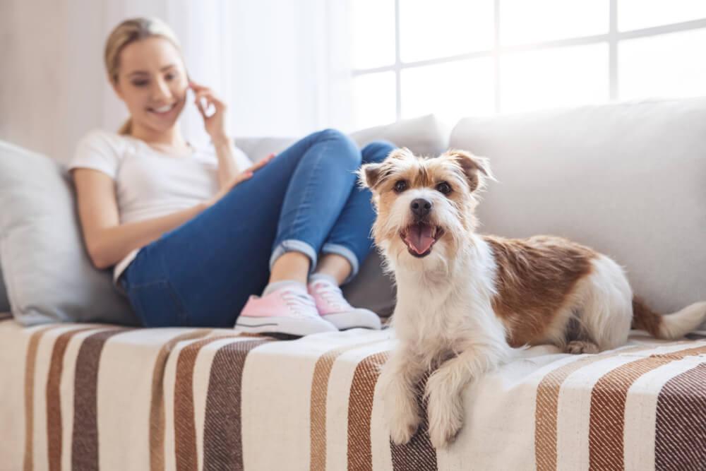 Bo Velika Britanija najemnikom stanovanj po zakonu omogočila, da imajo hišnega ljubljenčka?