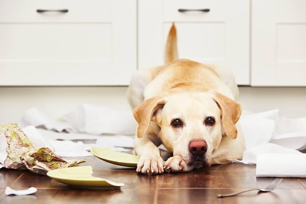 Kako pripraviti psa, da ne bo v stiski, ko je sam doma?