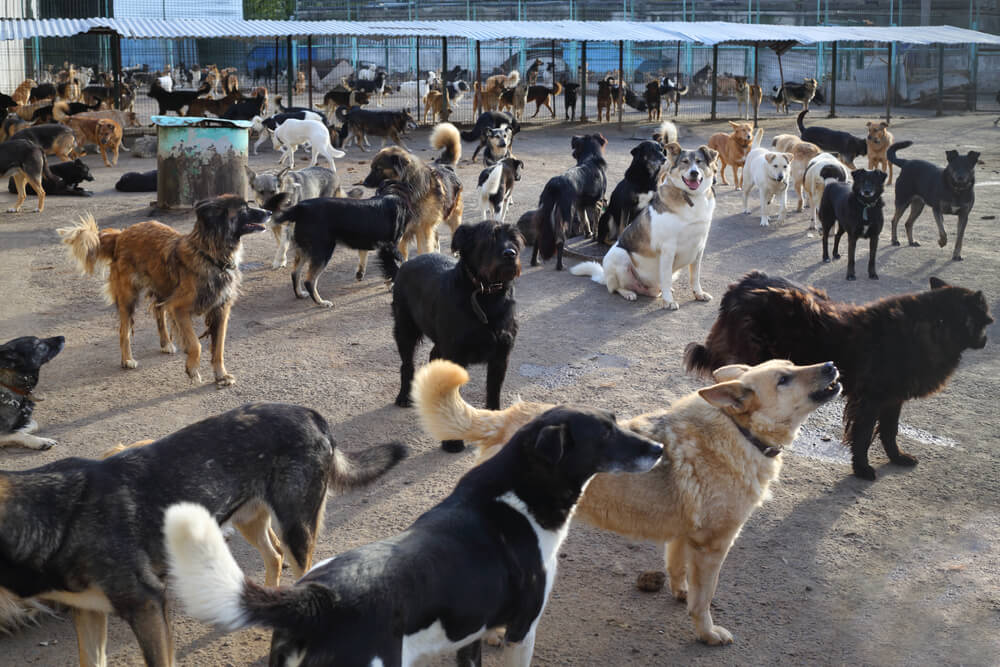Iz majhne hiše rešili 164 podhranjenih psov