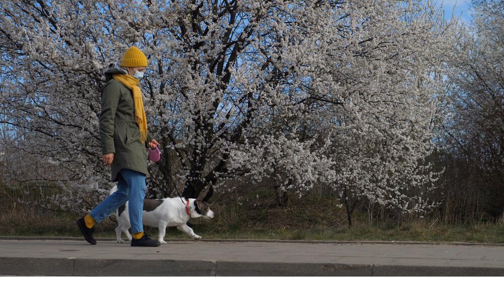 Kitajska provinca načrtuje popolno prepoved sprehajanja psov, kazen pa bo usmrtitev psa