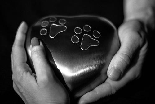 Vedno več pasjih skrbnikov se odloči za upepelitev svojega ljubljenčka, ko pride čas za slovo