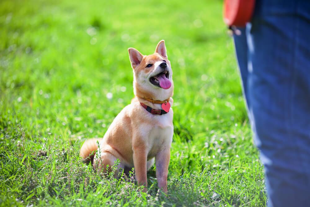Vzgoja psa: 5 največjih zmot