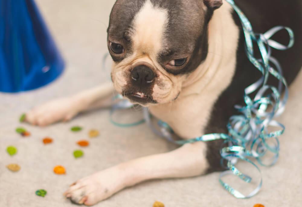 Decembrsko pokanje - kako pomagati psu?