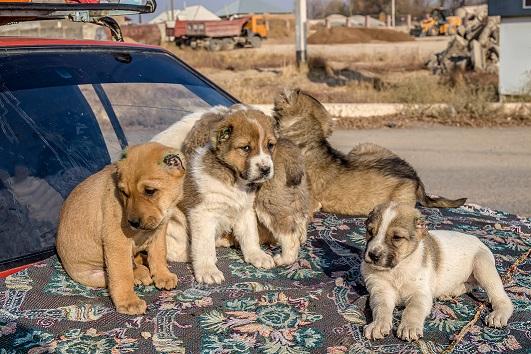 Težave psov iz množične vzreje