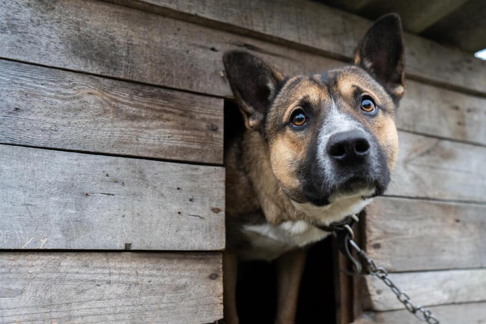 Zloraba in mučenje živali: lani 451 prijav in 521 prekrškov, odvzeli pa so 189 živali