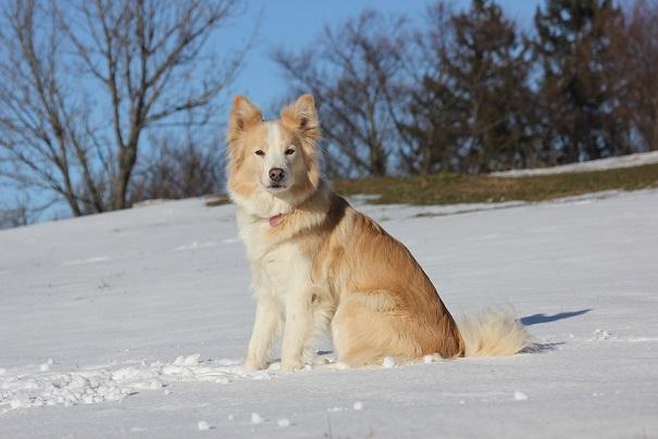 S psom na izlet: Limbarska gora