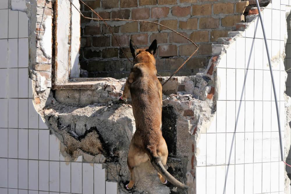 Pes, ki je bil tik pred evtanazijo zaradi 'agresivnosti', v porušeni Petrinji iz ruševin rešil žensko