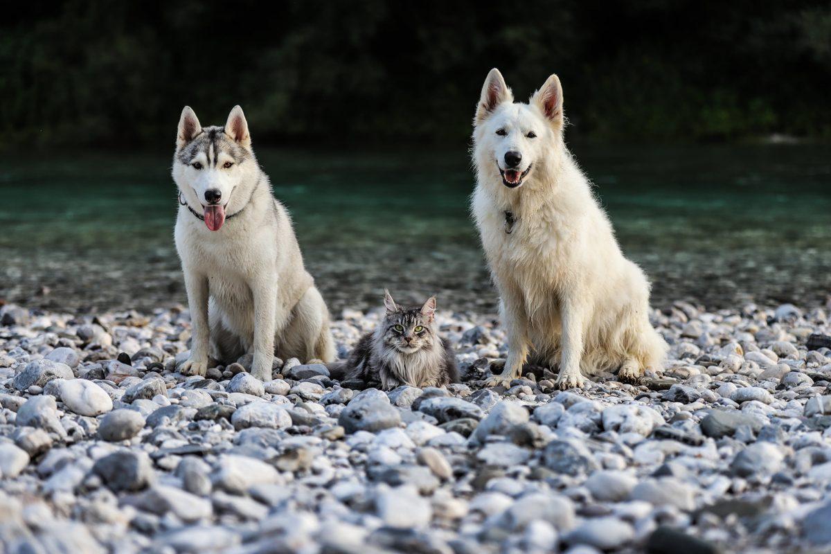 Spomin na poletje in prvo dopustovanje z dvema psoma in mačkom
