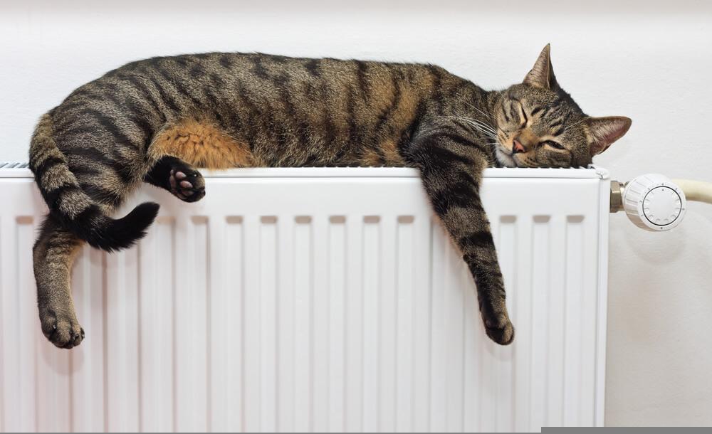Mačje poležavanje na radiatorju – zaščita je smiselna