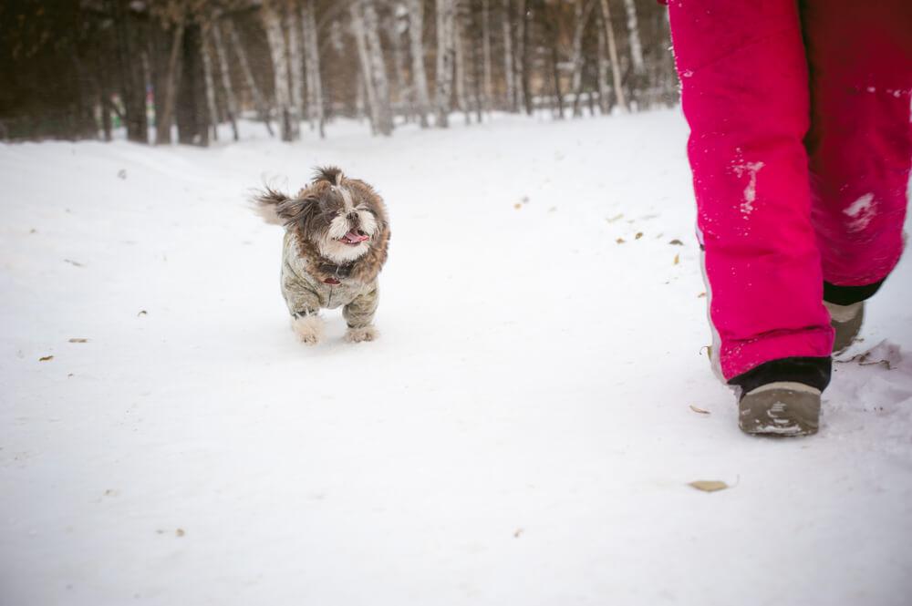 Šest dni po plazu na Norveškem v ruševinah našli živega psa