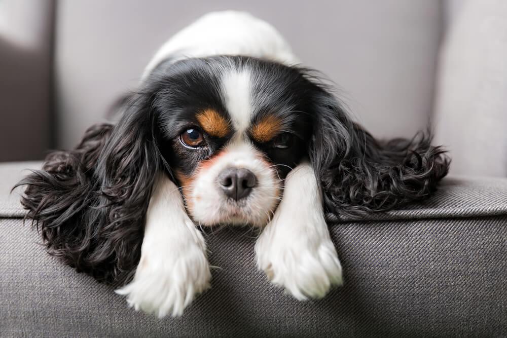 13 pasem psov, ki so najmanj agresivne