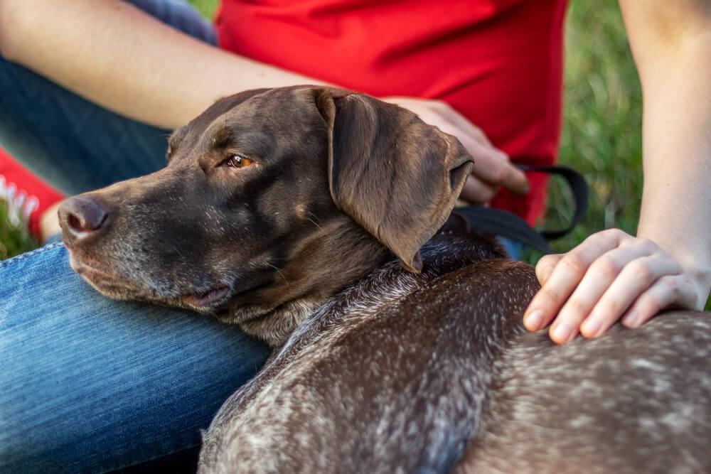 Je oddaja psa, ko pride do vedenjskih težav ali spremenjenega življenja, res prava rešitev?