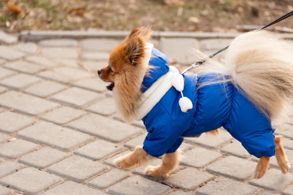 Ali psi res potrebujejo oblačila?