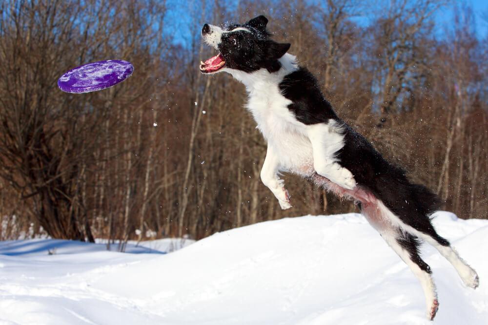 Frizbi, tek ali žoganje s psom na zimskih površinah niso priporočljivi