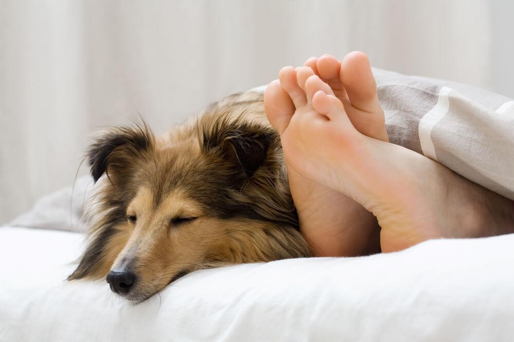 Pes v postelji - da ali ne?