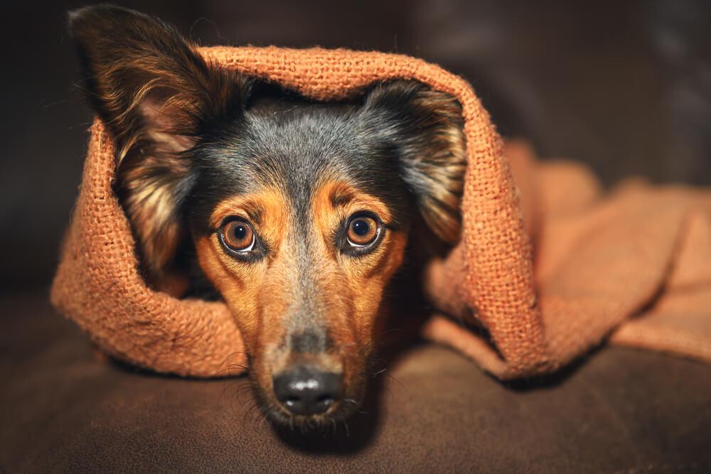 Kako prepoznamo psihične težave psa?