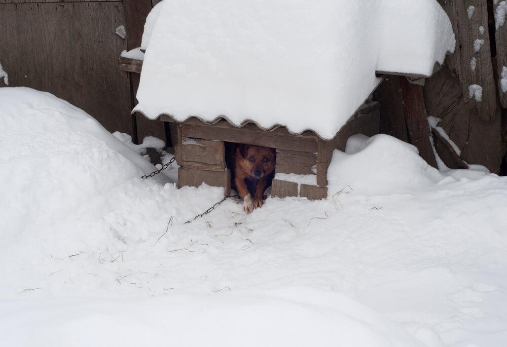 V mrzlih dneh potrebujejo zunaj živeči psi posebno skrb