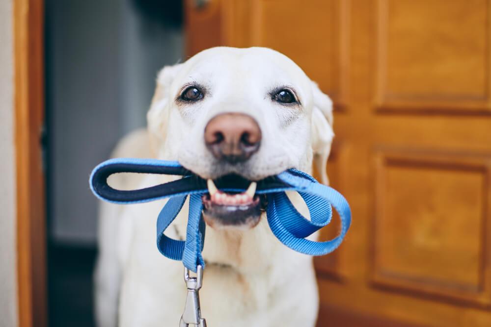 V Canberri za nesprehajanje psa kazen: 3300 evrov