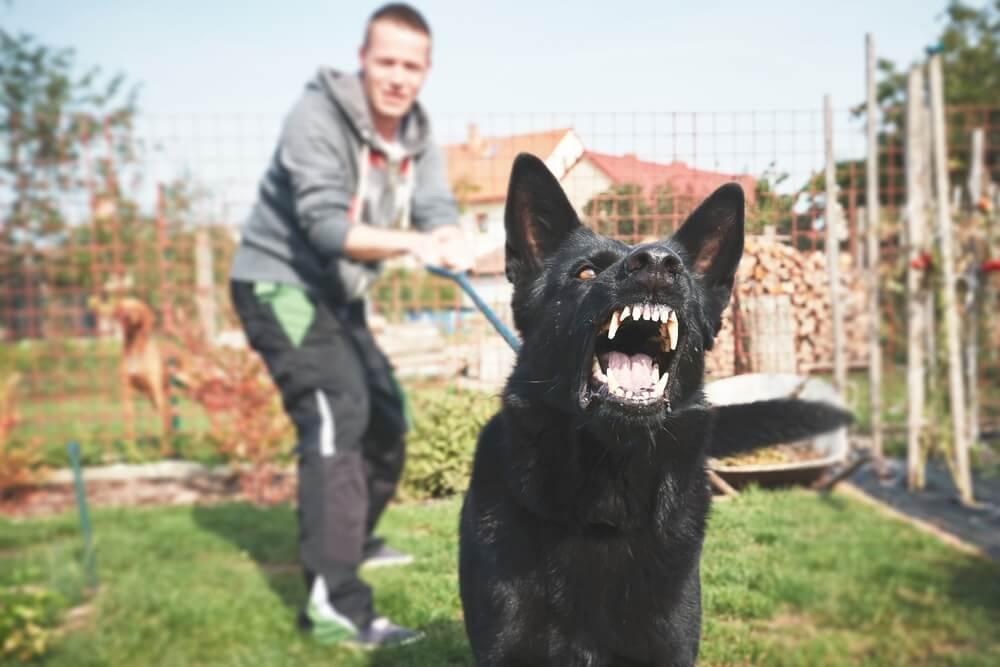 Status nevarnega psa: gre za negotove in prestrašene pse, krivda je na strani skrbnika