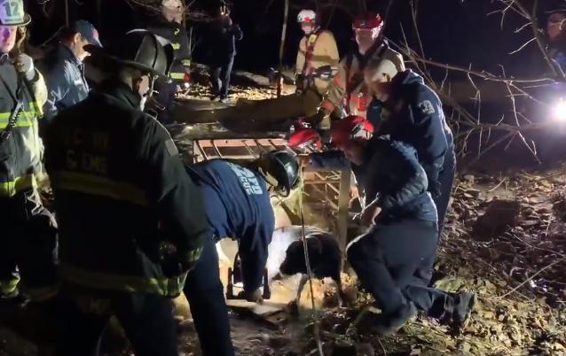 Video: Ekipa gasilcev rešila labradorca Bradyja iz odtočne cevi