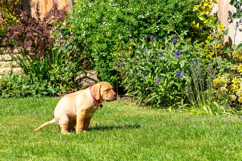 Moški mora plačati 1000 evrov, ker je pustil, da je pes kakal pri sosedi in ni želel pospraviti za njim