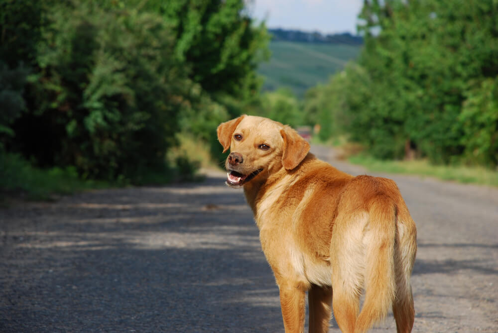 Kaj storiti, ko se pes izgubi ...