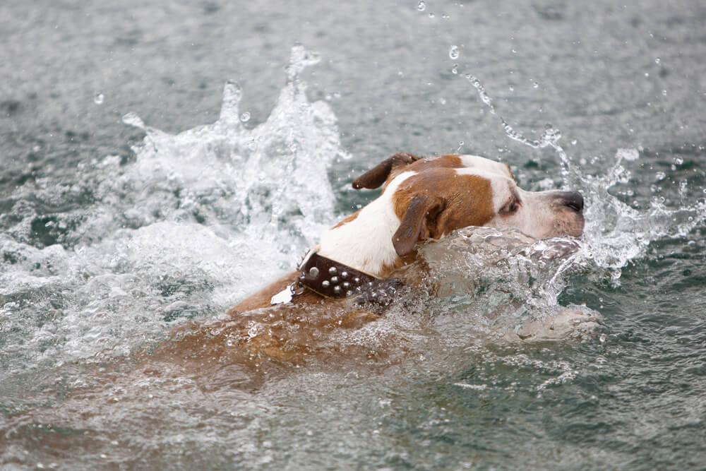 Kuža Max skočil v reko in tik pred utopitvijo rešil dečka
