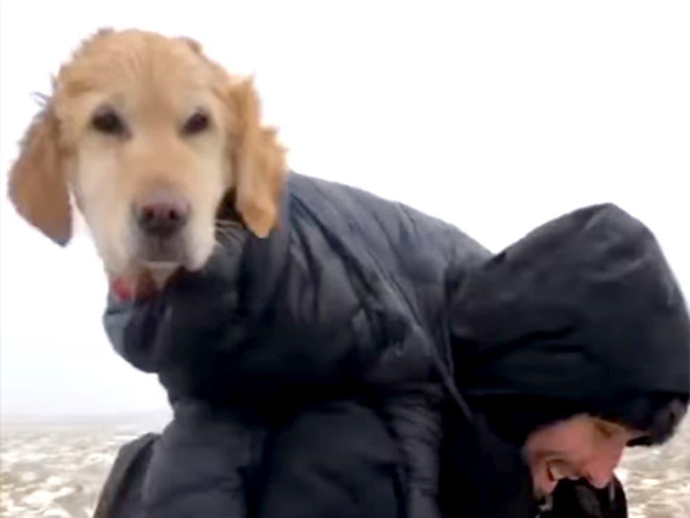 Psička po dveh tednih rešena z gore: po snegu in ledu jo je par odnesel 8 kilometrov v dolino